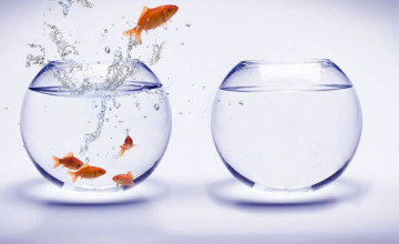 breakdowns-into-breakthrough-innovation-fish-bowl